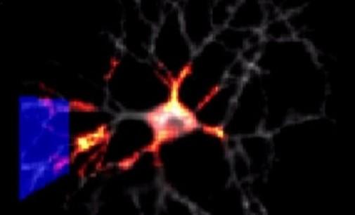 Cientista de Harvard ilumina neurônios para encontrar curas para o cérebro
