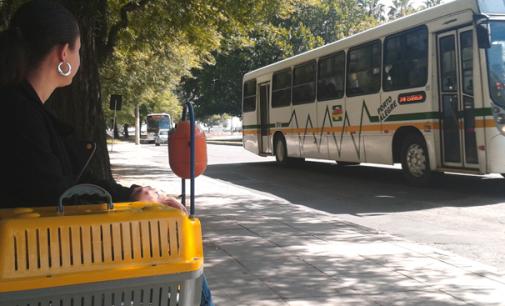 Haddad sanciona lei que permite levar animais domésticos em ônibus