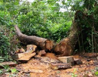 Desmate na Amazônia Legal sobe 40% entre novembro e janeiro, diz Inpe