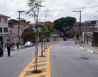 Prefeitura de SP planta árvores no asfalto para livrar calçadas e fios