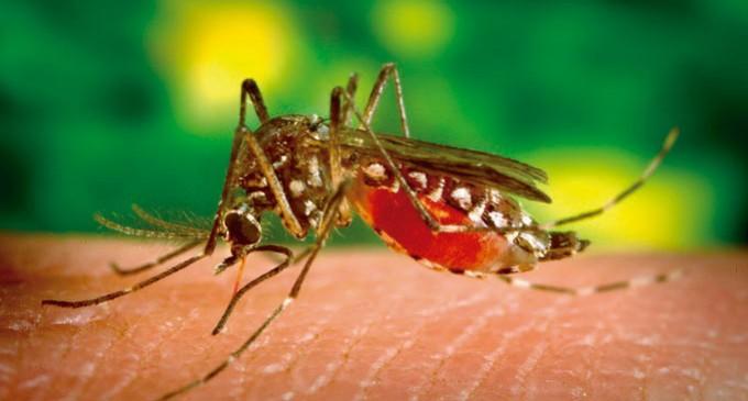 Especialistas tiram dúvidas sobre a febre amarela