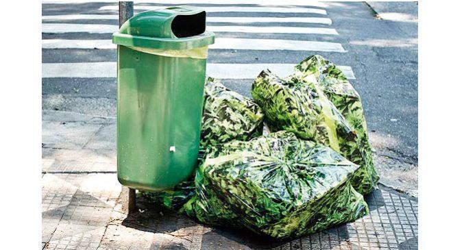 Descarte de lixo verde: onde descartar e a importância da atividade
